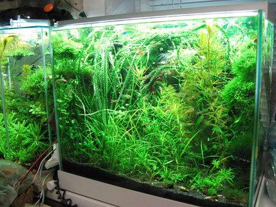 Светодиодное освещение аквариума - 1.jpg