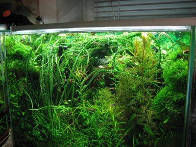 Светодиодное освещение аквариума - 2.jpg