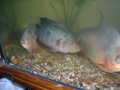Что за рыба и чем кормить? - df4522e42a97.jpg