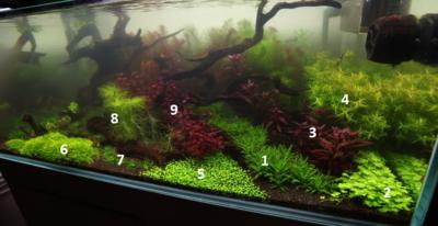 Аквариумные растения - опознание растений. - resizedcouchoct21.png