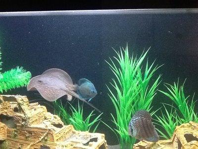 Мутная вода в аквариуме, муть в аквариуме - image.jpg