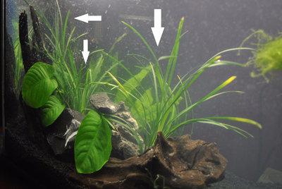 Аквариумные растения - опознание растений. - 2.jpg