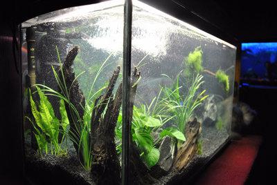 Аквариумные растения - опознание растений. - DSC_0158.JPG