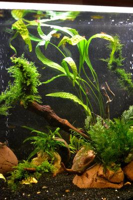 Аквариумные растения - опознание растений. - DSC_2284.JPG