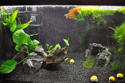 Мой первый аквариум с живыми растениями 60 литров ЮлькО  - eWDKOOLsbwA.jpg