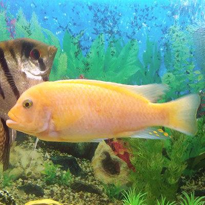 Помогите опознать рыбку опознание рыб  - IMG_20150930_221901.jpg