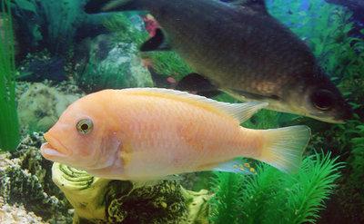 Помогите опознать рыбку опознание рыб  - IMG_20150930_222032.jpg
