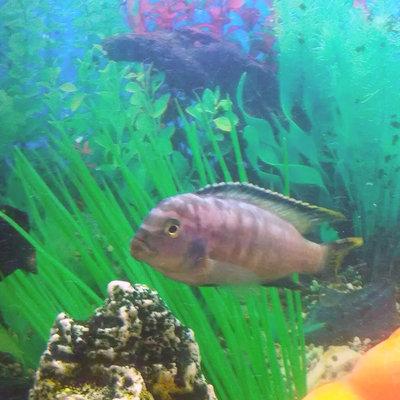 Помогите опознать рыбку опознание рыб  - IMG_20150930_222750.jpg