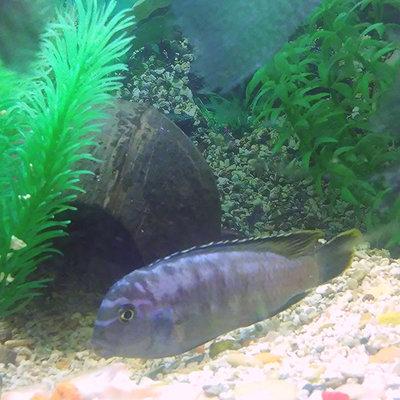 Помогите опознать рыбку опознание рыб  - IMG_20150930_222846.jpg