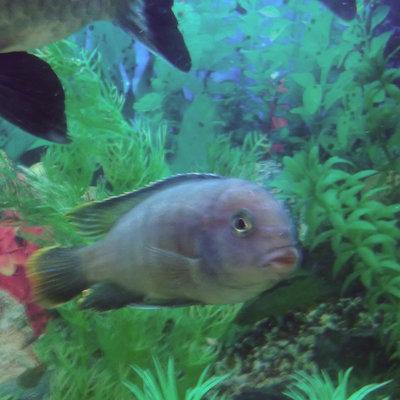 Помогите опознать рыбку опознание рыб  - IMG_20150930_223057.jpg