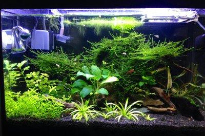 Светодиодное освещение аквариума - unnamed.jpg