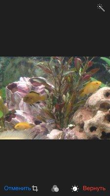 Помогите опознать рыбку опознание рыб  - image.jpg