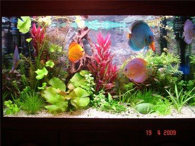 Мои аквариумы Алексей7  - 3fa6e8b47704.jpg