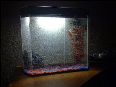 Мой аквариум 45 литров magadan_kmv  - 4742405a931e.jpg