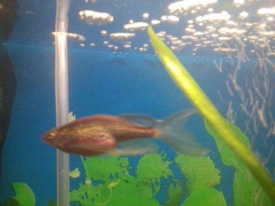 Помогите опознать рыбку опознание рыб  - IMG_20151025_002056.jpg
