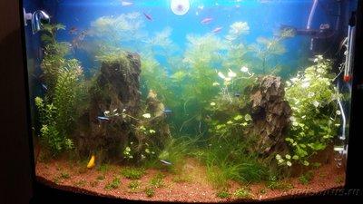 Мутная вода в аквариуме, муть в аквариуме - 2015-11-04 12.27.21.jpg