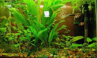 Мой аквариум 50 литров Dragon  - x_1e023d30.jpg