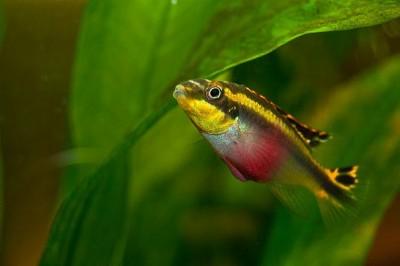 Мой аквариум 50 литров Dragon  - x_b2867a06.jpg