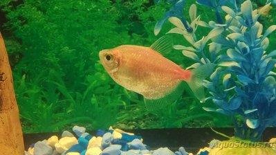 Помогите опознать рыбку опознание рыб  - Omd7tAO6_l4.jpg