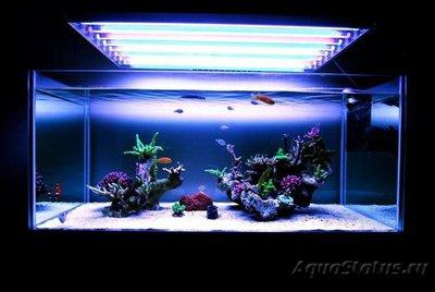 Аквариум - это не просто - аквариум - минимализм1.jpg
