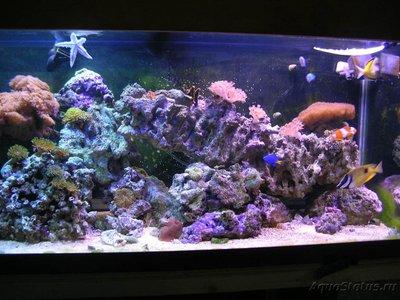 Аквариум - это не просто - навал в аквариуме море.jpg