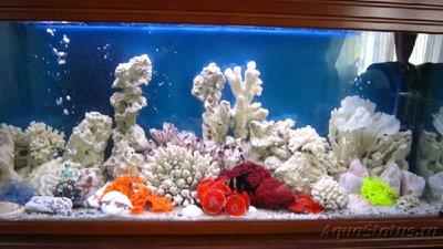 Аквариум - это не просто - навал в аквариуме.jpg
