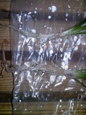 Аквариумные растения - опознание растений. - IMG_20151118_152819.jpg