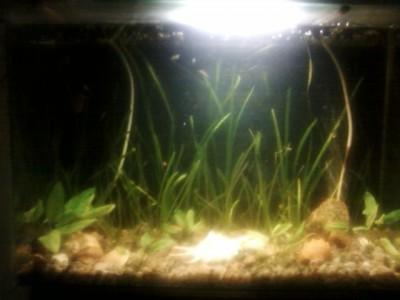 Мой аквариум 30 литров MORRO  - SP_A0117.jpg