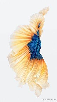 Фотографии селекционных форм петушков - image.jpg
