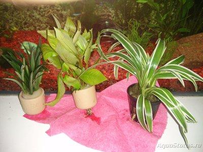 Аквариумные растения - опознание растений. - IMG_20151209_181750.jpg