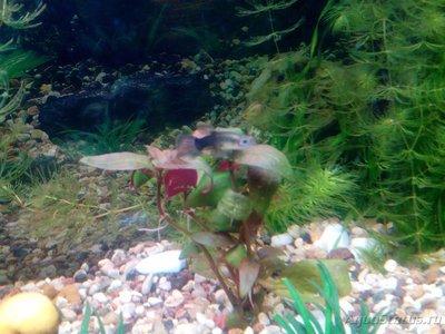 Помогите опознать рыбку опознание рыб  - 1449749980942-877359773.jpg