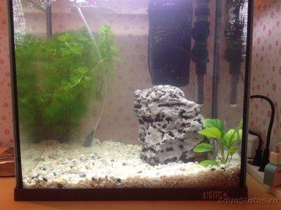 Сколько рыбок можно держать в аквариуме на 30 литров? - image.jpeg