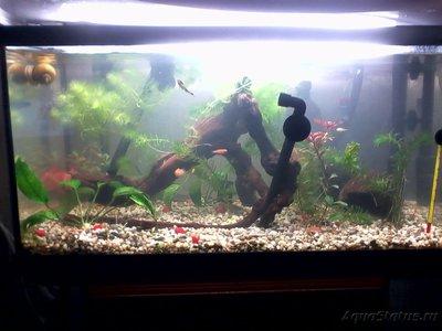 Выбор внешнего фильтра для аквариума. Какой выбрать внешний фильтр? - IMG_20160102_205203_1.jpg