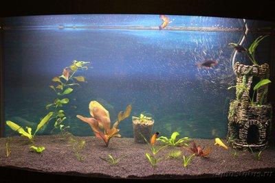 Очень медленный аквариум-травник 100 литров mcflyspb  - IMG_0612.JPG