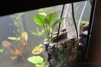 Очень медленный аквариум-травник 100 литров mcflyspb  - IMG_0614.JPG
