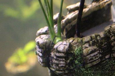Очень медленный аквариум-травник 100 литров mcflyspb  - IMG_0615.JPG
