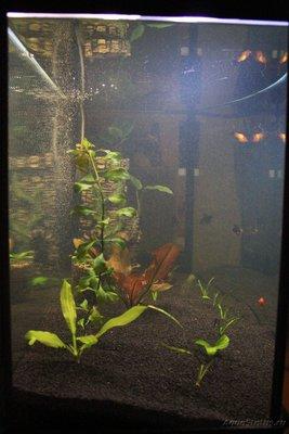 Очень медленный аквариум-травник 100 литров mcflyspb  - IMG_0789.JPG