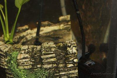 Очень медленный аквариум-травник 100 литров mcflyspb  - IMG_0793.JPG