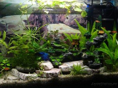 Мой маленький аквариум на кухне 30 литров Elena36  - DSC01128.JPG