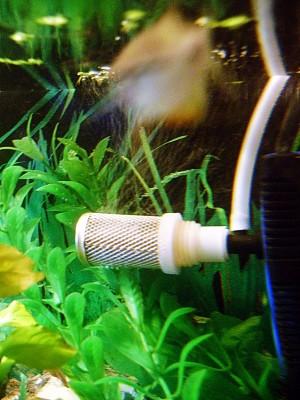 Растения изогнуты, чтобы лучше было видно. Это не из-за течения воды - DSC00855.jpg