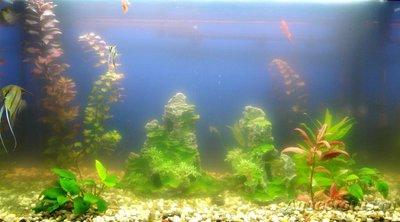Мутная вода в аквариуме, муть в аквариуме - DSC02900.JPG