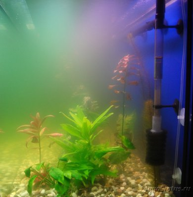 Мутная вода в аквариуме, муть в аквариуме - DSC02901.JPG