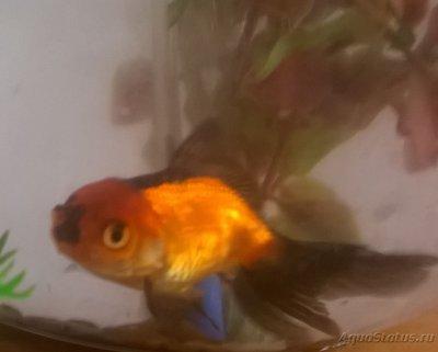 Помогите опознать рыбку опознание рыб  - WP_20151226_003.jpg