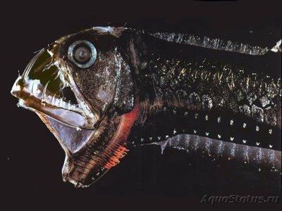 Фотографии необычных водных обитателей - 4PKF5saI5U0.jpg