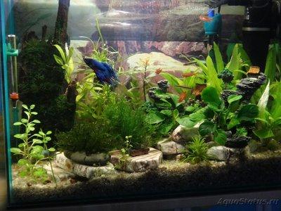 Мой маленький аквариум на кухне 30 литров Elena36  - а.JPG