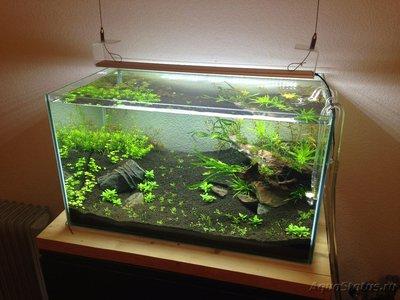 Мой аквариум Moss 110 литров Рома Beat  - IMG_1006[1].JPG