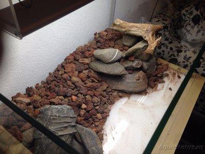 Мой аквариум Moss 110 литров Рома Beat  - IMG_0927[1].JPG