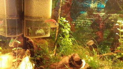 Помогите опознать рыбку опознание рыб  - 20160214_203100.jpg