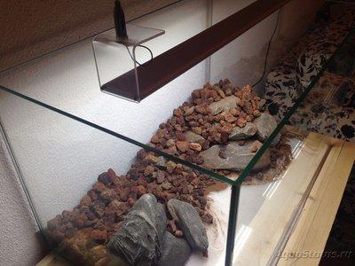 Мой аквариум Moss 110 литров Рома Beat  - IMG_0897[1].JPG