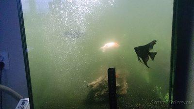 Мутная вода в аквариуме, муть в аквариуме - DSC_0786[1].JPG